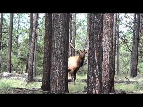 2014 Arizona Unit 1 Archery Elk Hunt