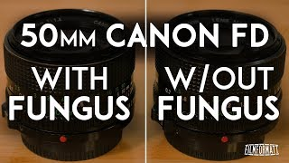 Comparing a Lens with Fungus to One Without