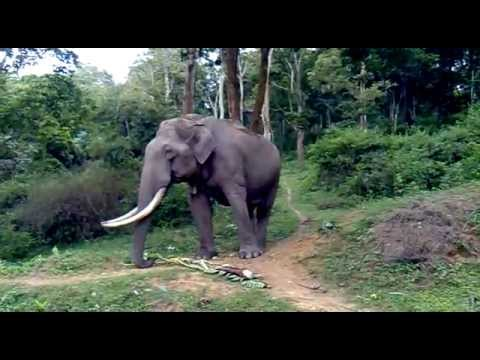 Wild Elephant..Friendly with Humans taken on mobile Nokia 5235