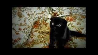 Котята на авито