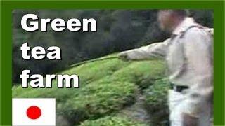 Mountain top green tea farm 日本の山の頂上に緑茶ファーム - Walking in Japan 日本でのウォーキング