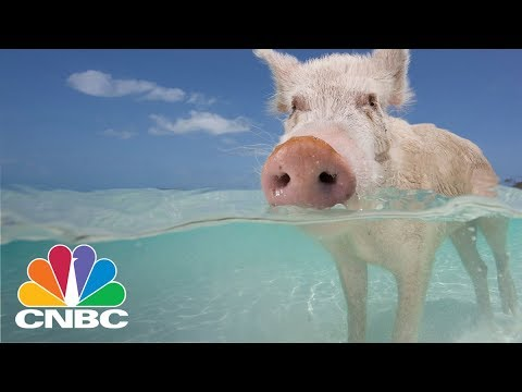You Can Swim With Pigs Off This Island In The Bahamas | CNBC