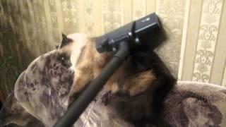 Генеральная уборка кота.(, 2014-03-01T17:22:03.000Z)