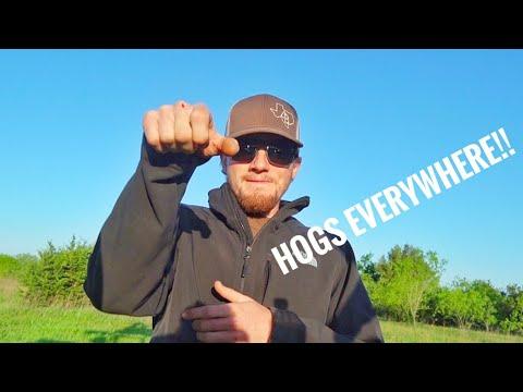 Handgun HOG Hunt!!