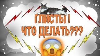 Глисты у кота? Как правильно глистогонить животное!