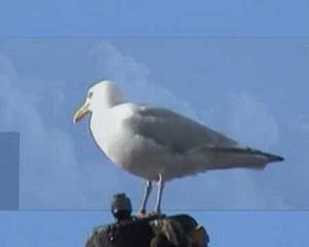 2008 KLKL Mooie vogel in de lucht