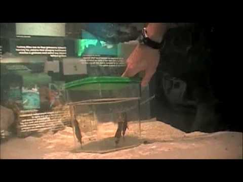The pier aquarium 39 s new baby sharks youtube for Baby sharks for fish tanks