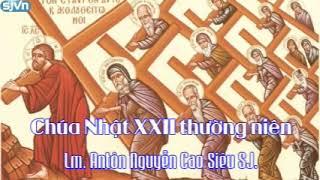 Học hỏi Phúc Âm Chúa Nhật XXII thường niên Năm A