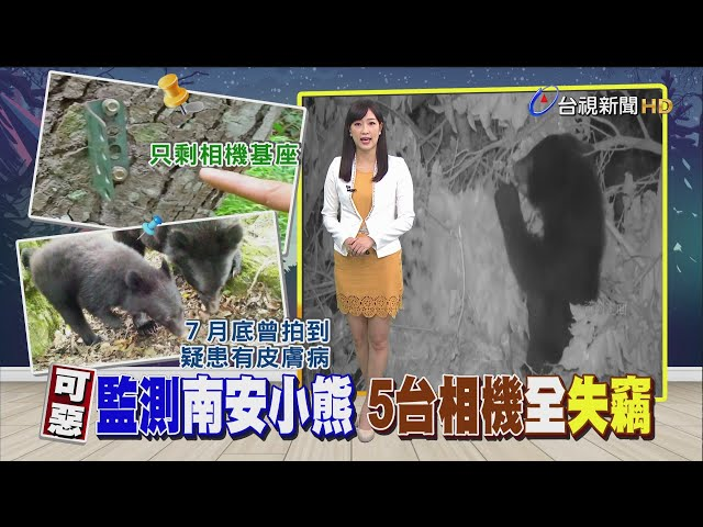 昨天才裝又失竊監測南安小熊相機被偷