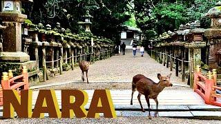 NARA,  Day trip from KYOTO or OSAKA / Nara Deer Park, Todaiji, Kasuga Taisha Shrine / Japan Travel