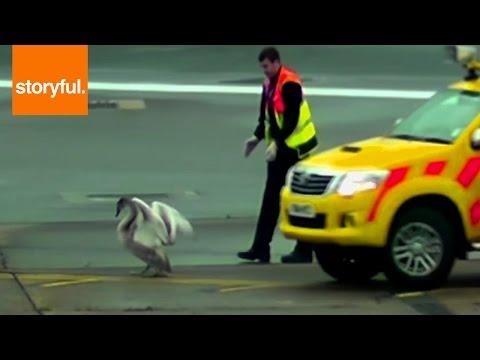 Evasive Bird Holds Up Airport Runway
