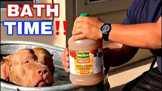 American Bully Vinegar Rinse | Benefits | Natural Flea Dip