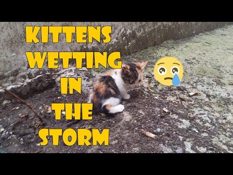 Five Baby Kittens Wetting in the Storm | Kitten Videos | Cute Kittens