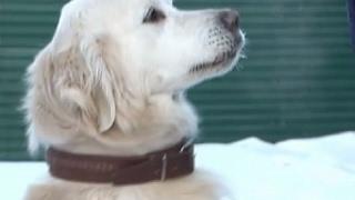 Собаки на службе человека