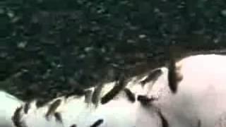 Psoriasis Fish Cure Dr Fish Garra Rufa Video