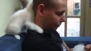 Очень ласковые котята!! Мило!