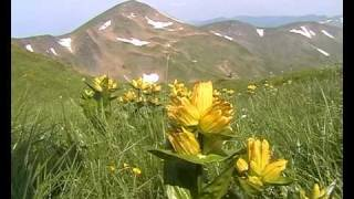 Ukrainian Carpathians - Svydovets.avi