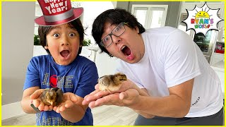 HAPPY NEW YEAR WITH Ryan's Chickens and more 1 hr kids activities!!