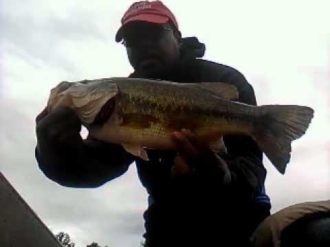 Pompton Lake Bass