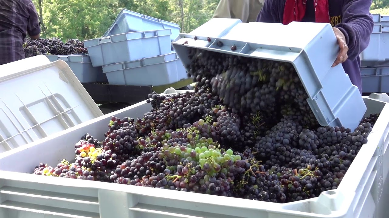 Mountain Valley Winery – Great Smoky Mountain Wine
