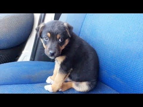 Бездомный щенок недоверчиво взглянул на людей он всегда жил возле мусорного контейнера...