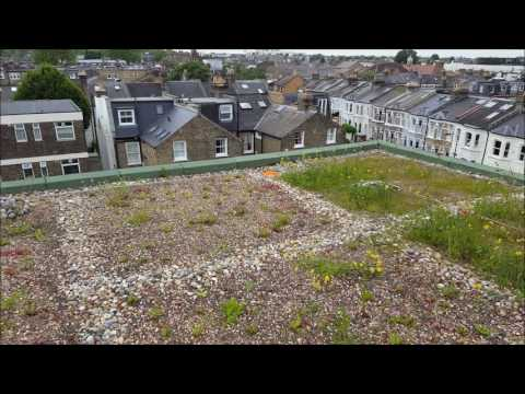Richard Knight House green roof