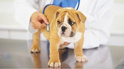 Best Veterinarian Jacksonville FL Cheap
