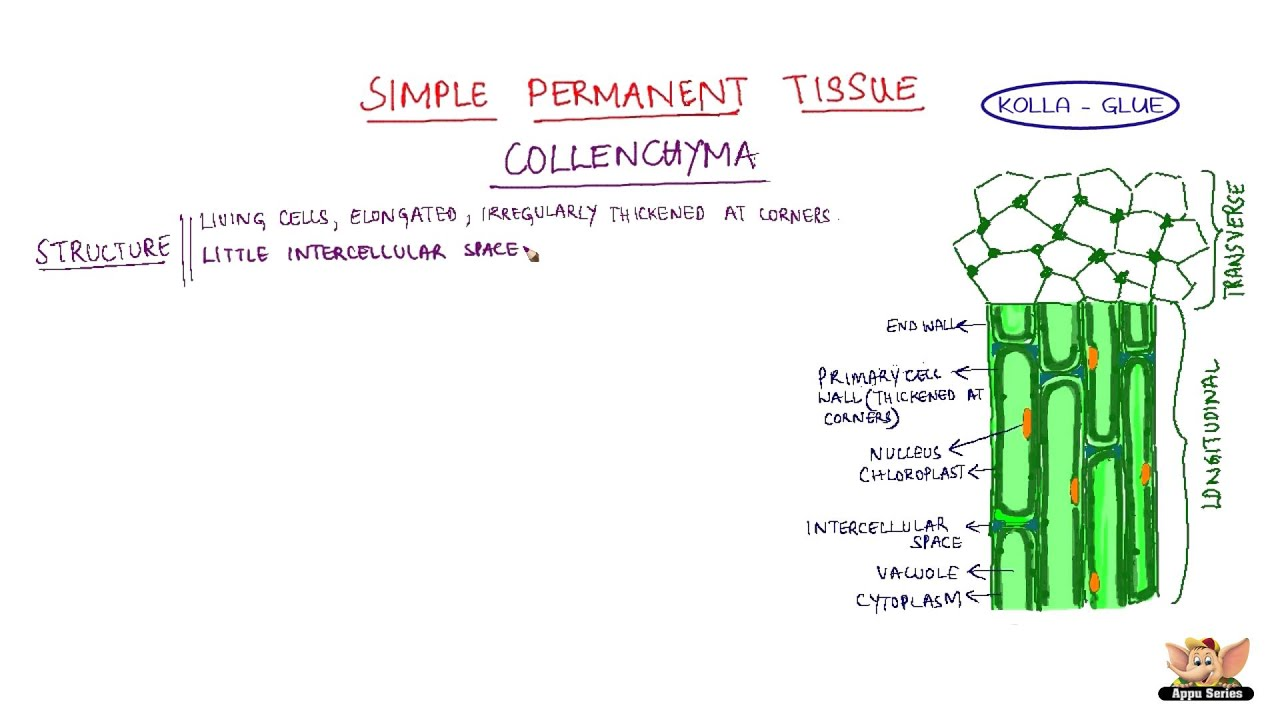 simple tissue Main difference the main difference between simple and complex tissue is, simple tissues are made up of cells of same type or kind and complex tissues are made up of.