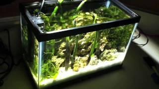 (((2.5 Gallon Pico))) Planted Saltwater Tank