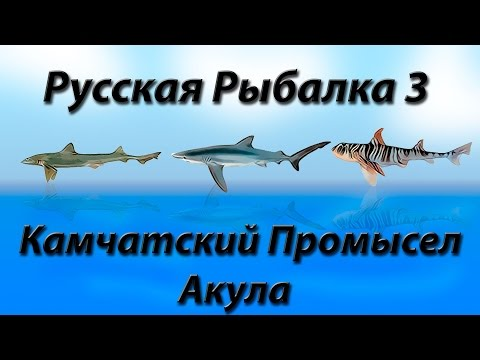 Русская Рыбалка 3.9 Камчатский Промысел Акула закрытие квеста