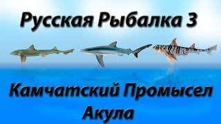 Російська Рибалка 3.9 Камчатський Промисел Акула закриття квесту