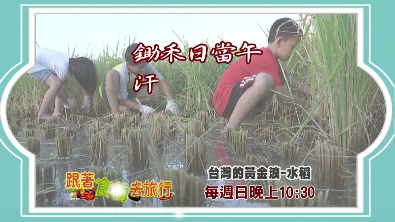 【跟著食物去旅行】第2集預告 臺灣的黃金浪-水稻 - YouTube
