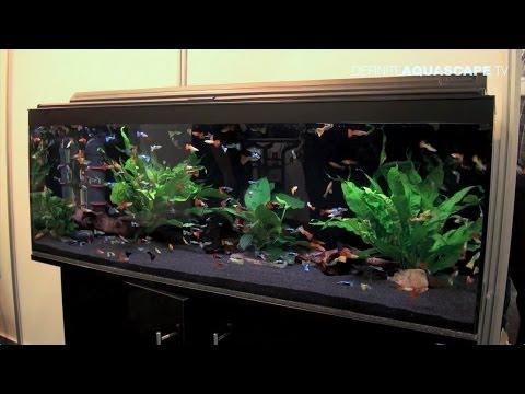 Aquarium ideas from InterZoo 2014 (pt.25) - Saigon Aquarium