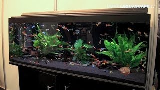 Aquarium ideas from InterZoo 2014 (pt.25) - Saigon Aquarium