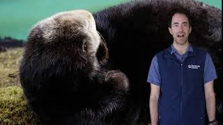 Fast Ocean Facts — Sea Otter Fur