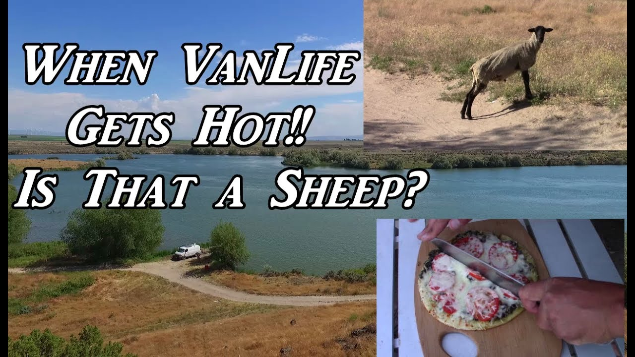 when-vanlife-gets-hot-is-that-a-sheep-on-the-road