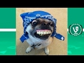 TRY NOT TO LAUGH or GRIN: Funny Vines Animals Compilation 2017 | Funny Cat & Dog Videos #KXI