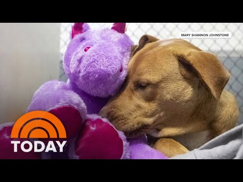 Stray-Dog-Finds-Fur-Ever-Home-With-Stuffed-Unicorn-Toy-TODAY