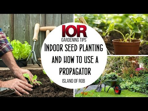 Indoor Seed Planting And How To Use A Propagator