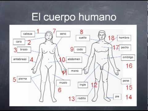 Language tailor medical spanish 12a part 2 youtube language tailor medical spanish 12a part 2 ccuart