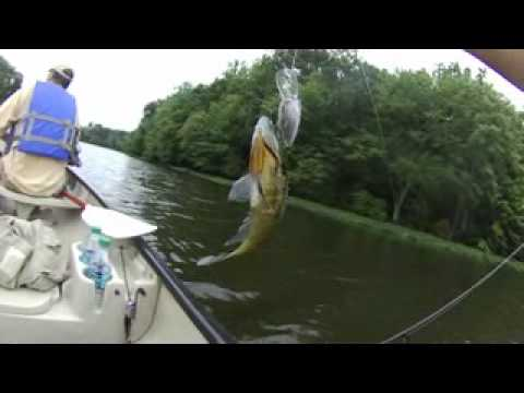 Blue gill burke lake va fishing youtube for Free fishing license for veterans