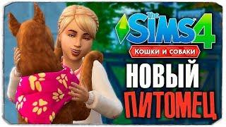 НОВЫЙ ПИТОМЕЦ СОФИ! - The Sims 4