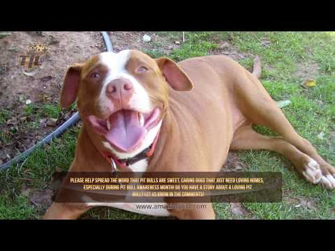 5 Times a Pit Bull Saved its Owner's Life