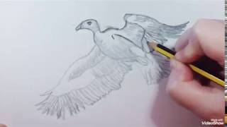 How to draw a White-backed Vulture (speed) - Como dibujar un Buitre Dorsiblanco (rápido)