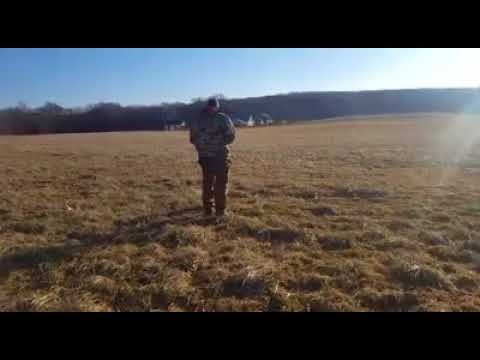 Dog Training | Bailey working on long line recall | Solid K9 Training Dog Training