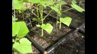 Raised Garden Bed Irrigation System And Grid Planting Guide In One!