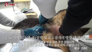 방광/요도 결석 수술_수술 전문 동물병원 서울금천24시…