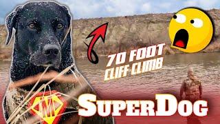 Duck Hunting Dog, Amazing Retrieve (Crazy Labrador Retriever)
