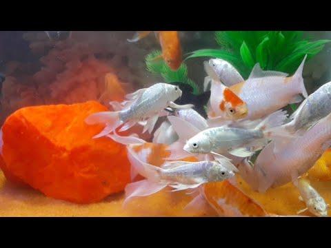 FISH AQUARIUM DECORATION || Fish Tank setup || New MILAN AQUARIUM INDIA