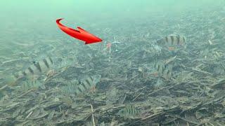 ОКУНЬ КЛЮНЕТ ТОЧНО Атака Окуня под водой Ловля окуня на балансир и блесну Подводная съёмка